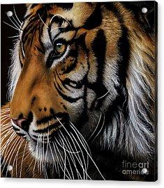 Sumatran Tiger Profile Acrylic Print by Jurek Zamoyski