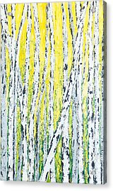 Summer Aspen Birch Trees Acrylic Print by Vicki Conlon
