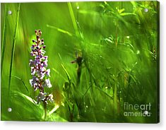 Acrylic Print featuring the photograph Summer At Grass Roots Level by Kennerth and Birgitta Kullman