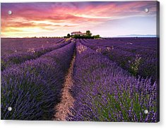 Summer At Valensole Acrylic Print