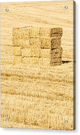 Summer Bales Acrylic Print by Clint Brewer