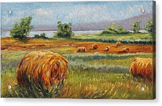 Summer Bales Acrylic Print by Meaghan Troup