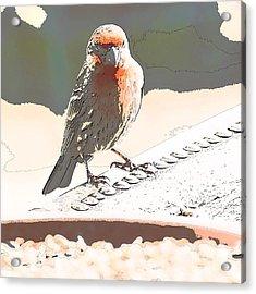 Summer Bird Acrylic Print by Artist and Photographer Laura Wrede