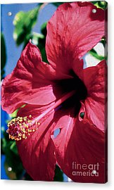 Summer Bloom Acrylic Print