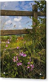 Summer Breeze Acrylic Print by Debra and Dave Vanderlaan