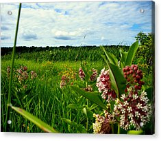 Acrylic Print featuring the photograph Summer Breeze by Zafer Gurel