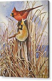 Summer Cardinals Acrylic Print by Cheryl Borchert