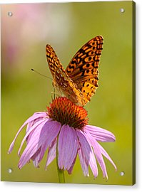 Summer Colors Butterfly Acrylic Print
