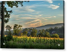 Summer Corn Acrylic Print