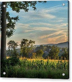 Summer Corn Square Acrylic Print by Bill Wakeley