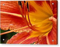 Acrylic Print featuring the photograph Summer Daylily by Julie Andel