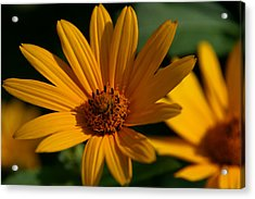 Acrylic Print featuring the photograph Summer Delight by Denyse Duhaime