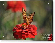 Summer Delights Acrylic Print
