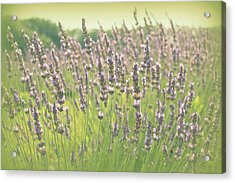Acrylic Print featuring the photograph Summer Dreams by Lynn Sprowl