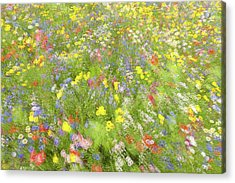 Summer Field Flowers.......... Acrylic Print