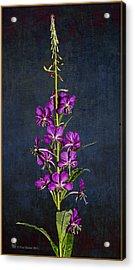 Summer Fireweed Acrylic Print