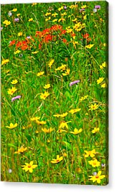 Summer Flowers On The Blue Ridge Parkway I Acrylic Print by Dan Carmichael