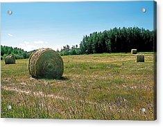 Summer Hay Acrylic Print