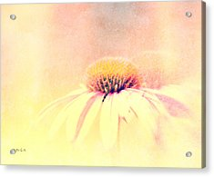Summer In A Day Acrylic Print by Bob Orsillo