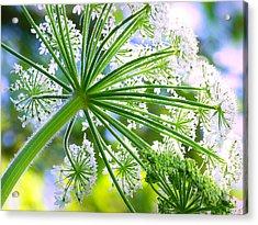 Summer Lace Acrylic Print