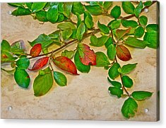 Summer Leaves Acrylic Print by Johanna Bruwer