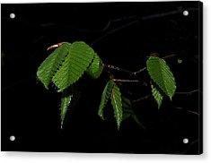 Summer Leaves On Black Acrylic Print