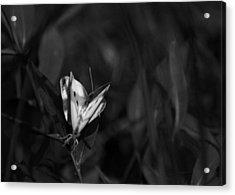 Summer Love Acrylic Print by Rebecca Sherman