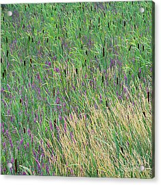 Acrylic Print featuring the photograph Summer Marsh by Alan L Graham