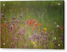 Acrylic Print featuring the photograph Summer Meadow by Ellen Heaverlo
