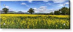 Summer Meadow Acrylic Print by Ian Mitchell