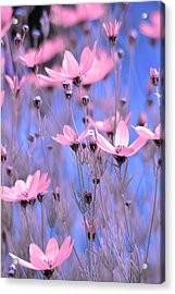 Summer Meadow Acrylic Print by Tommytechno Sweden