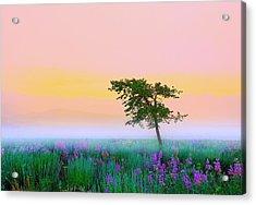 Summer Mood Acrylic Print