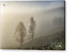 Summer Morning In Yellowstone Acrylic Print by Sandra Bronstein