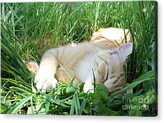 Summer Napping Acrylic Print by Michelle Wolff