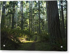 Summer Pacific Northwest Forest Acrylic Print