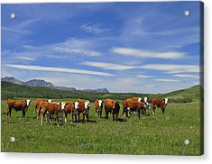 Summer Pastures Acrylic Print by Clay and Gill Ross