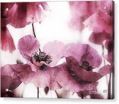 Summer Acrylic Print by Priska Wettstein