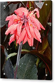 Acrylic Print featuring the photograph Summer Rain In Maryland by Emmy Marie Vickers