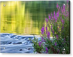 Summer Reflections Acrylic Print by Bill Wakeley