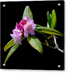 Acrylic Print featuring the digital art Summer Rhododendron by Timothy Hack