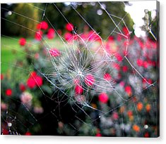 Acrylic Print featuring the photograph Summer Snowflake by Greg Simmons