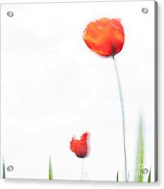 Summer Song Acrylic Print by Uma Wirth