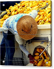 Summer Squash Acrylic Print by Karen Wiles