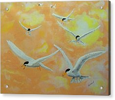 Summer Terns Acrylic Print by Rich Mason