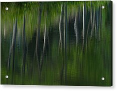 Summer Trees Acrylic Print by Karol Livote