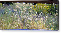 Summer Wheat Acrylic Print