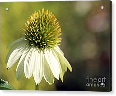 Summer White Acrylic Print by Mary Haber
