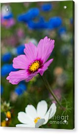 Acrylic Print featuring the photograph Summer Wild Blooms by Matt Malloy