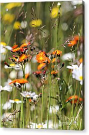 Summer Wildflowers Acrylic Print
