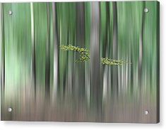 Summermorning Acrylic Print by Huib Limberg